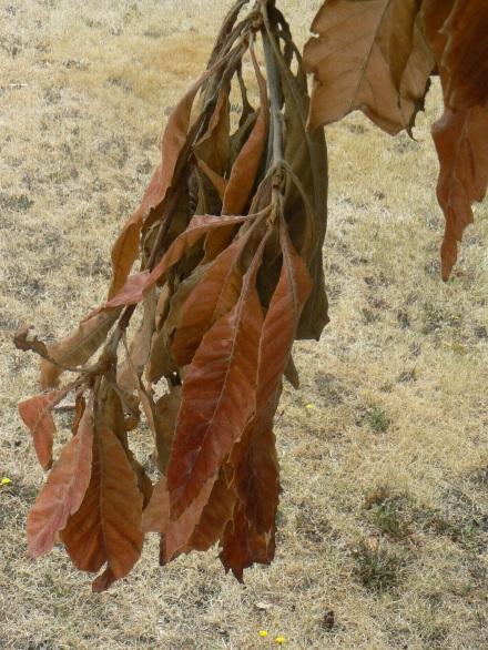Hobart Dry Branch
