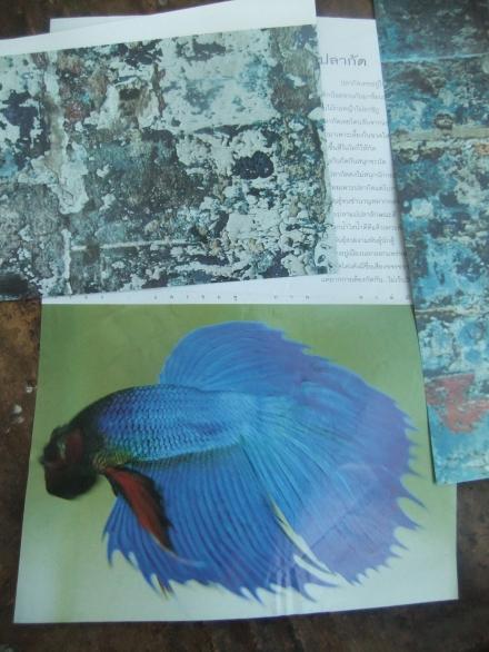 Aqua Cuttings Fish and Textures