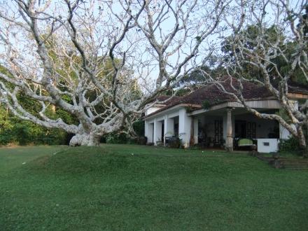 Bawa House and Tree