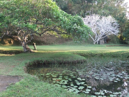 Bawa House Lily Pond