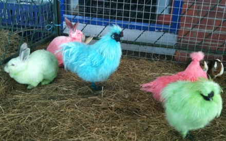 Easter Coloured Bunnies Chickens Pink