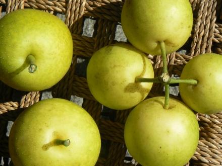 Nashi Japanese Pears