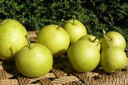 Nashi Oriental Pears