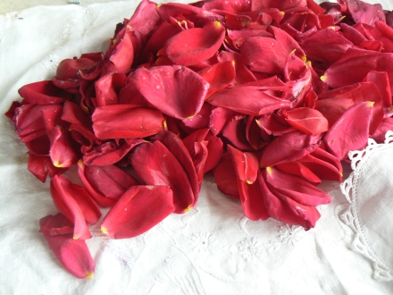 Gulkand Recipe Rose Petals Wash Dry
