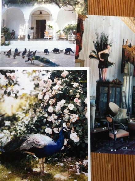 Peacocks Magazine Clippings Tunisia Garden Tim Walker