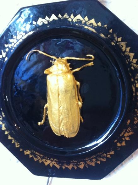 Gold Beetle Taxidermy Plate Art Kris Schaffer Tasmania