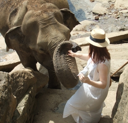 Inspiring Elephant