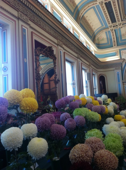 Out About Hobart Town Hall Chrysanthemum Flower Show 2013