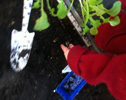 Dig Dig Dig children kids garden dirt soil spade vegetable
