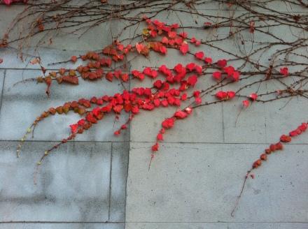 Leftovers Vine Autumn Fall Ornamental