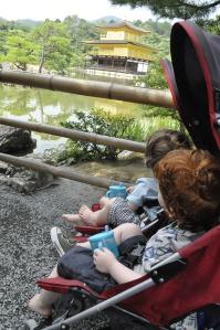 Kids Japan Kyoto Temple Golden Pavilion Kinkakuji