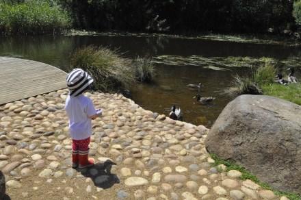Merry Christmas Feed Ducks Richmond Bridge Tasmania