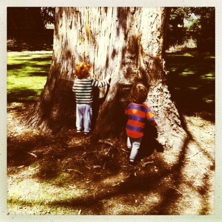 New Norfolk Tree Children Hipstamatic
