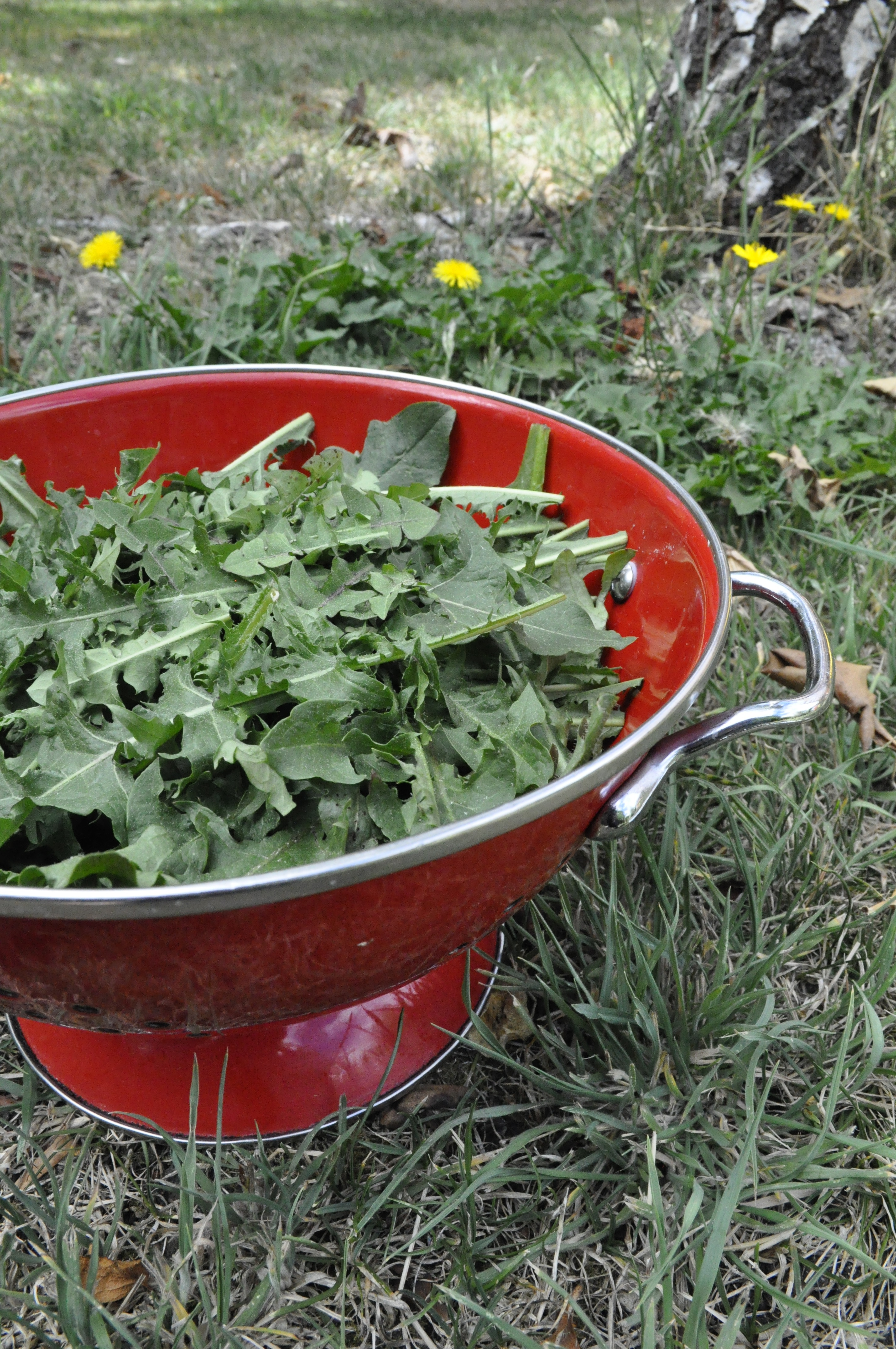 eat your greek weeds many cha cha