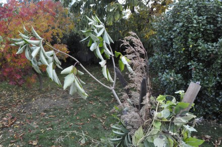 Autumn Fort Christmas Tree Branch Teepee Cubby Garden Debris Upcycle