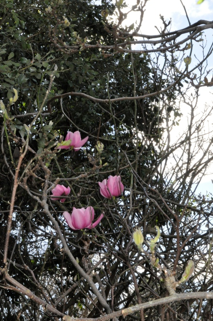 Positive Thinking Magnolia Flowers Winter