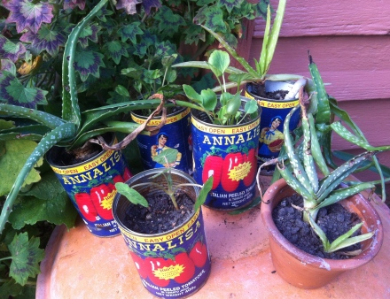 Travel at Home Rustic Mediterranean Garden Old Tomato Tins Italian