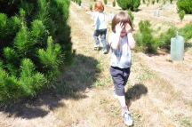 Christmas Tree Farm Fun Holiday Tradition Kids Culture