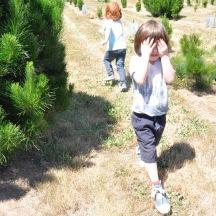 Christmas Tree Farm Fun Holiday Tradition Kids Culture