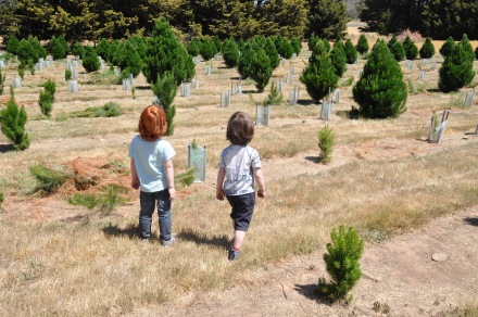 Christmas Tree Farm Pine Pagan History