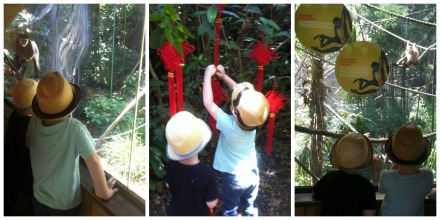 Melbourne Zoo Chinese New Lunar Year of the Monkey Travel at Home